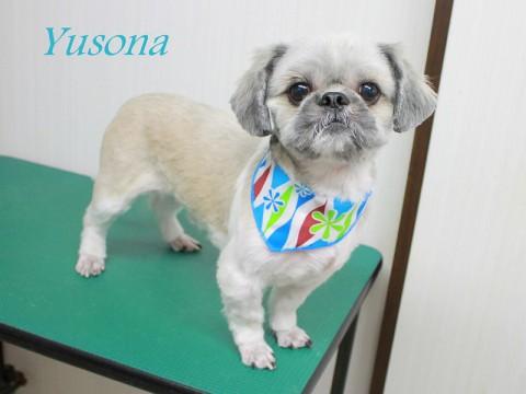 ミワユソナ151106