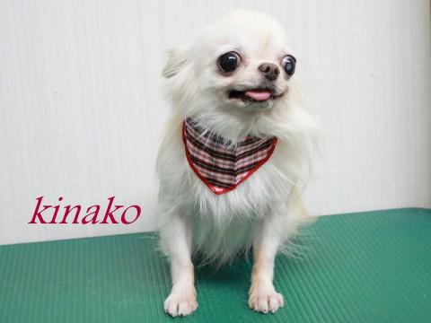 ニシカワキナコ151107