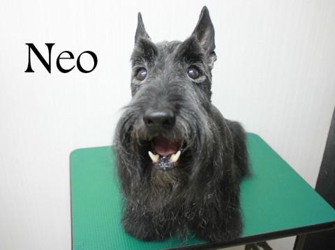 ニシオネオ151009