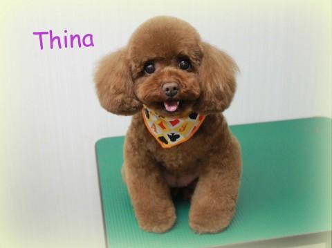 中尾ティナ