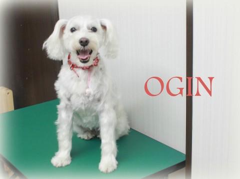 オオタオギン150607