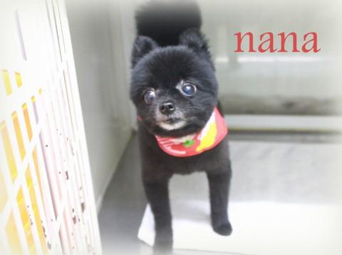 ナナ150608